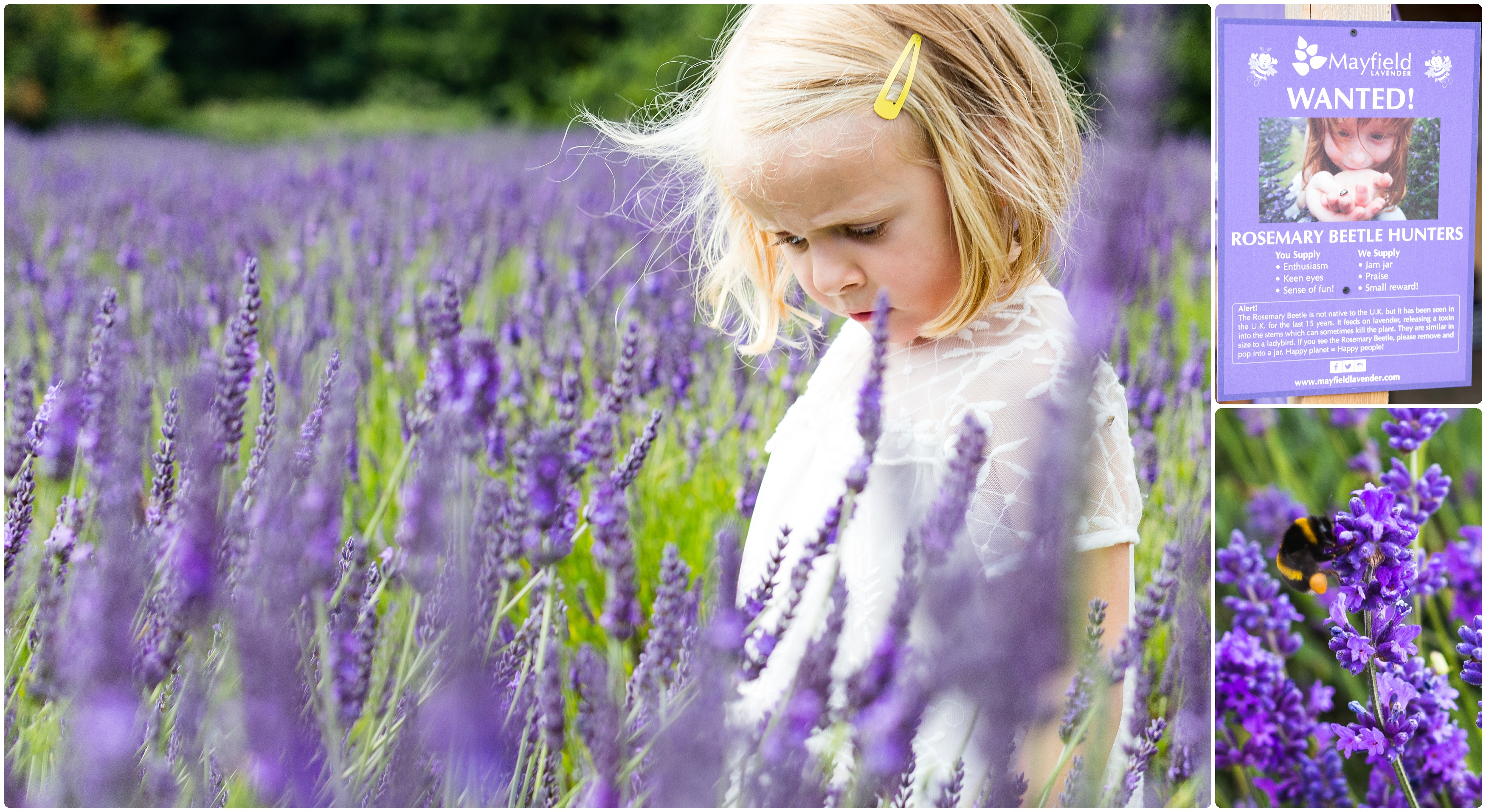 Mayfield Lavender family photo shoot