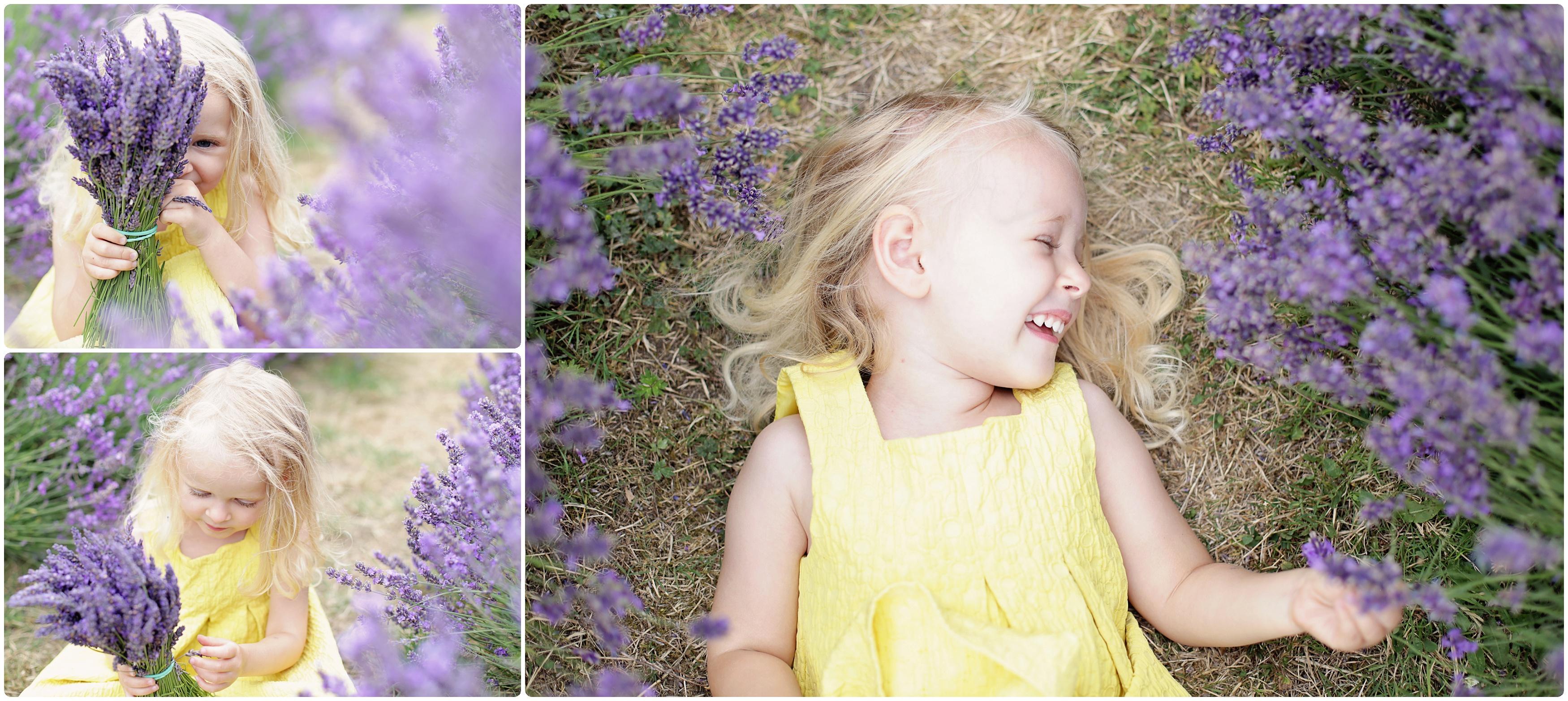 Lavender farm photo shoots