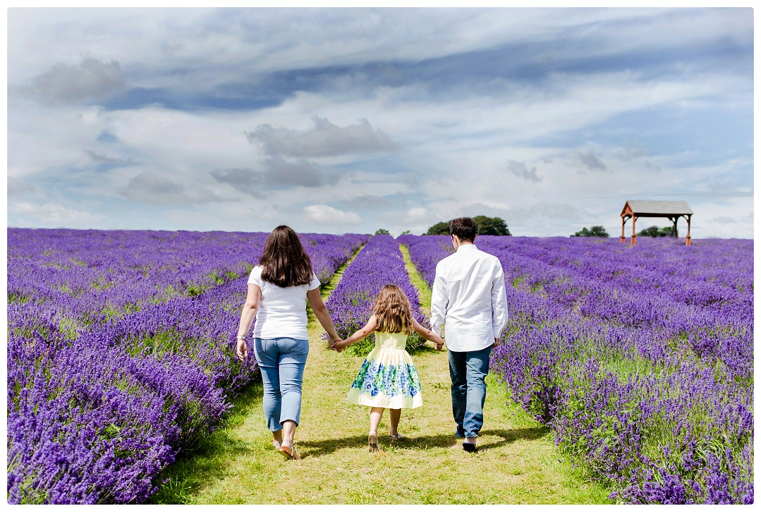 family walking in lavender field holding hands